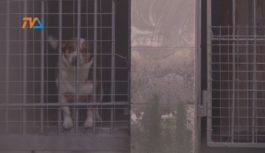 Zaostrzenie ustawy o ochronie zwierząt
