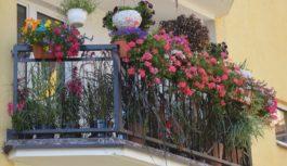 Kwitnące Suwałki czuli rzecz o balkonach i ogrodach